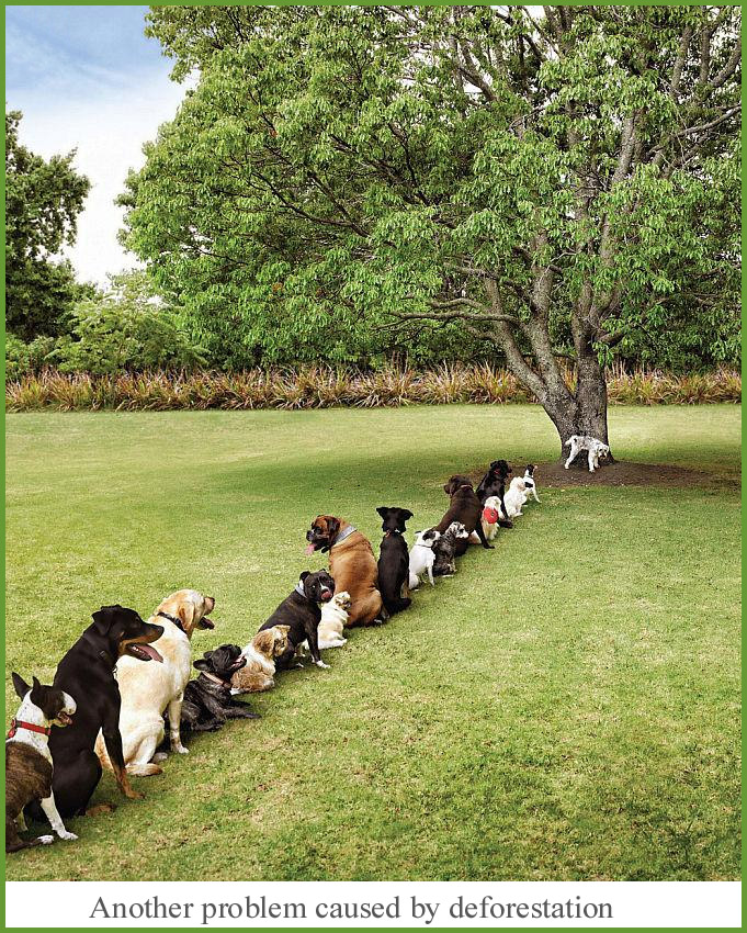 dogs-in-line-picture